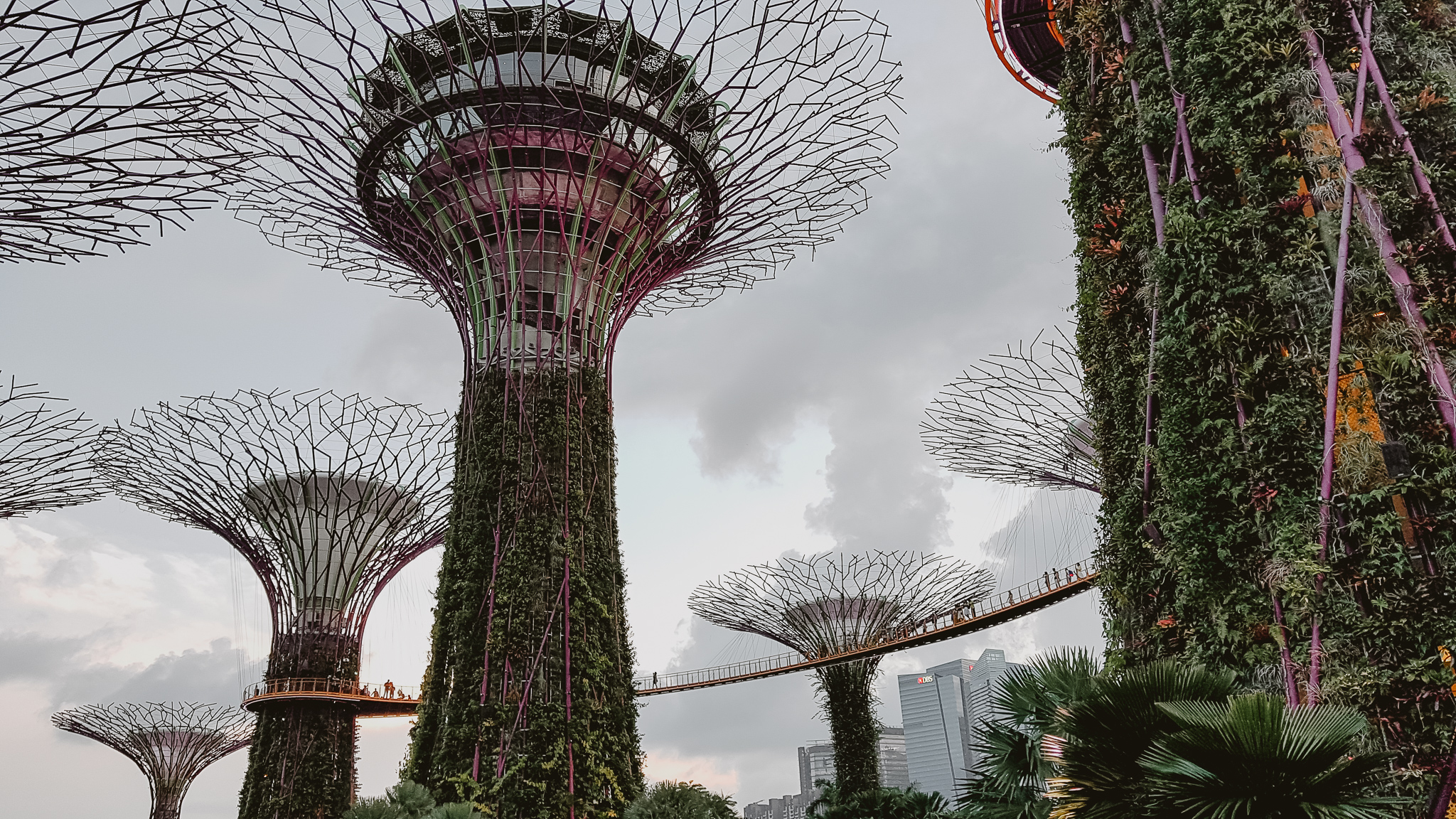 singapur garden by the bay ogrody